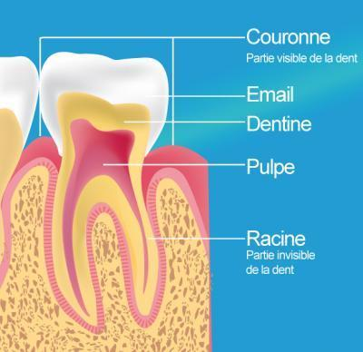 Traitement endodontique Paris 20